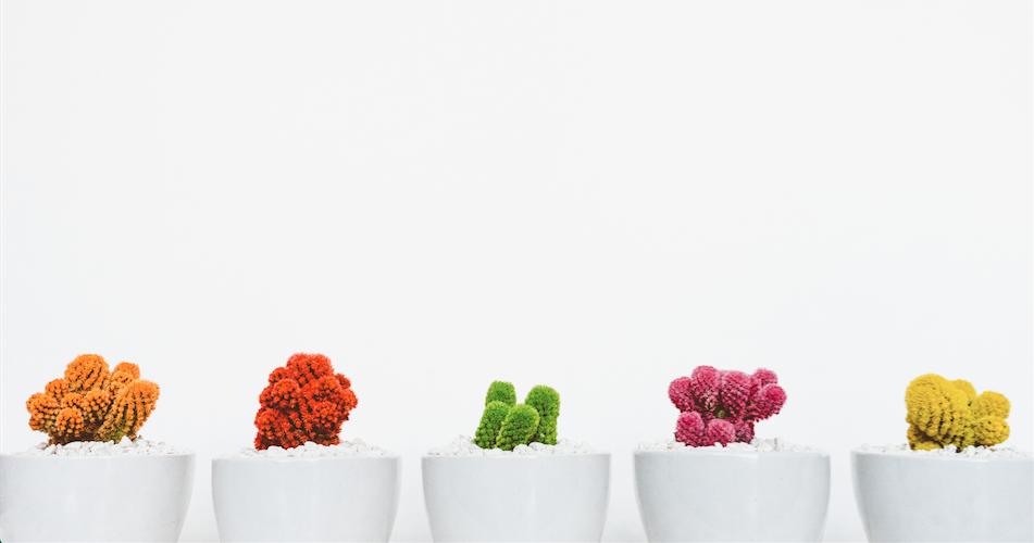 simple cacti