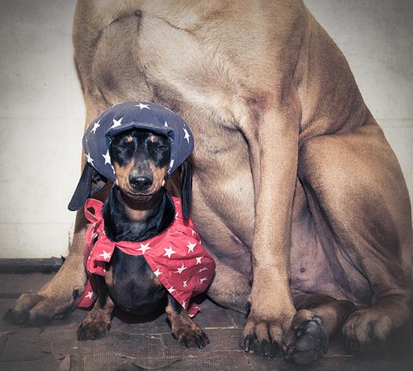 costume-dog