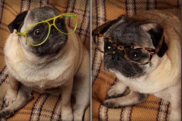 winston-modcloth-glasses-1