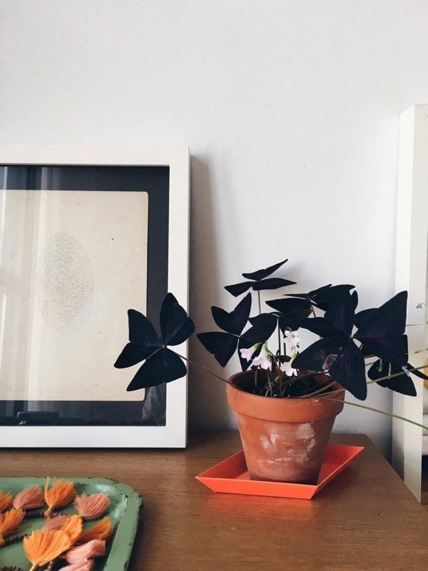 Aestheticsofjoy houseplants2